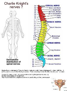 Nerves and spine and link to larger pdf image